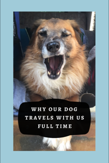 Why our Dog Travels With Us