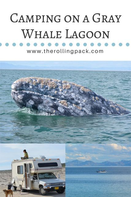 Mexico Travel Adventure: Gray Whale Watching in Baja, CA Mexico