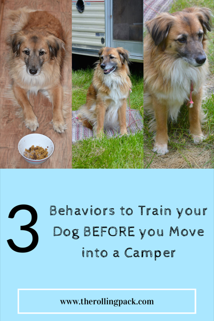3 Basic Behaviors to Train Your Dog Before you Move into a Camper