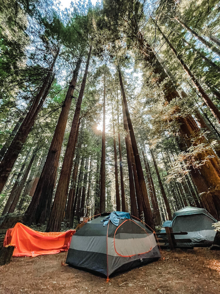 Tent in the redwoods on the pacific coast bike route